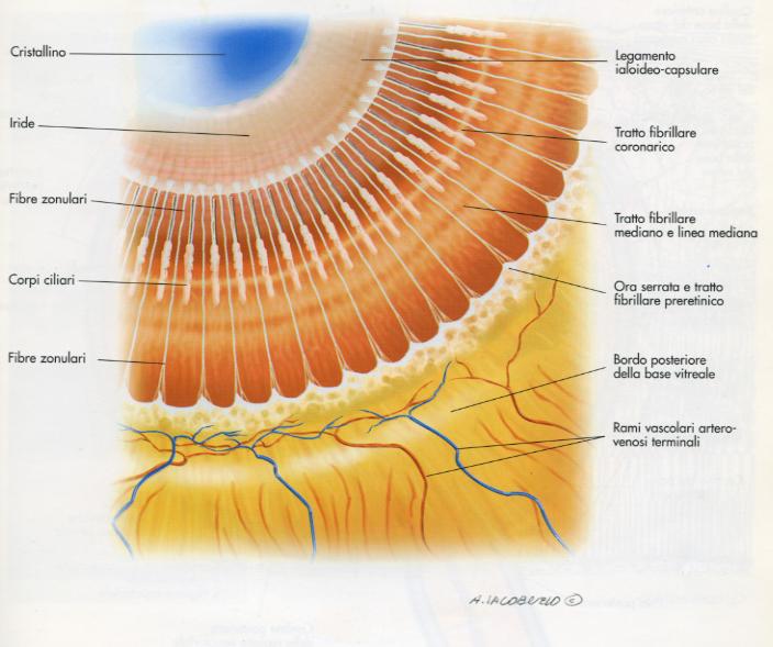 struttura occhio2